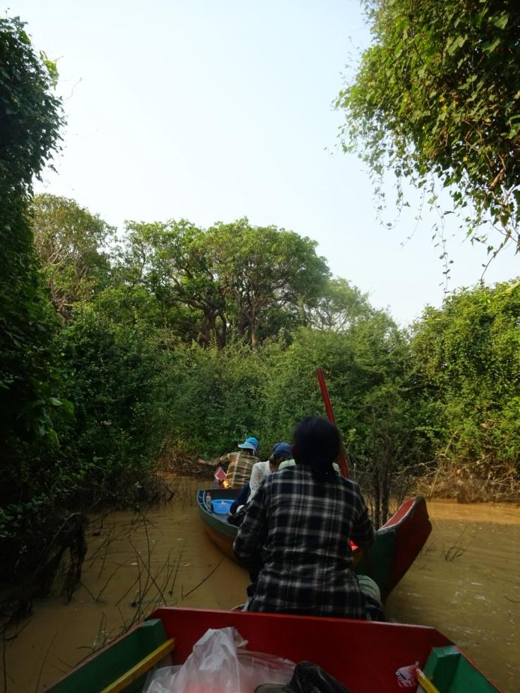 Boot im Mangroven Wald